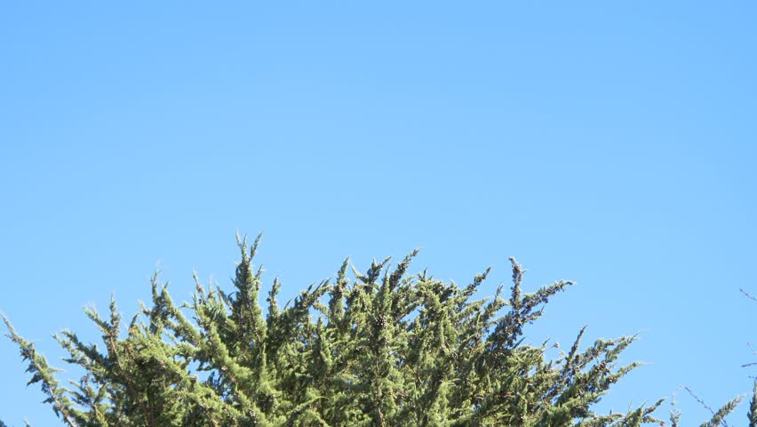 4k pov shot top of trees against blue sky 4k stock video clip - Moving Picture Frame