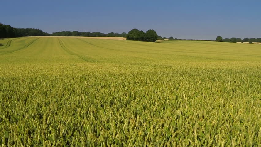Image result for countryside crops