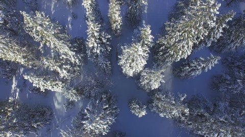 AERIAL: Footsteps in fresh snow leading through the winter forest