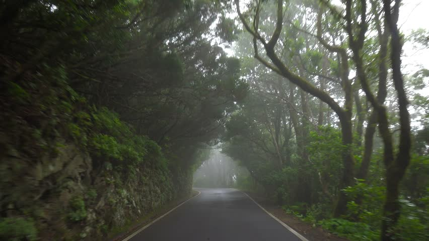 POV. Driving under canopy of mountain relict forest, Tenerife, Canary islands.
