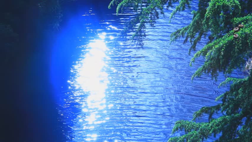 shining blue water and tree