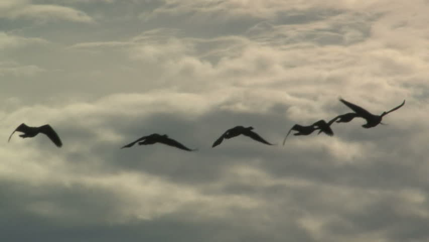 Geese Flying Silhouette