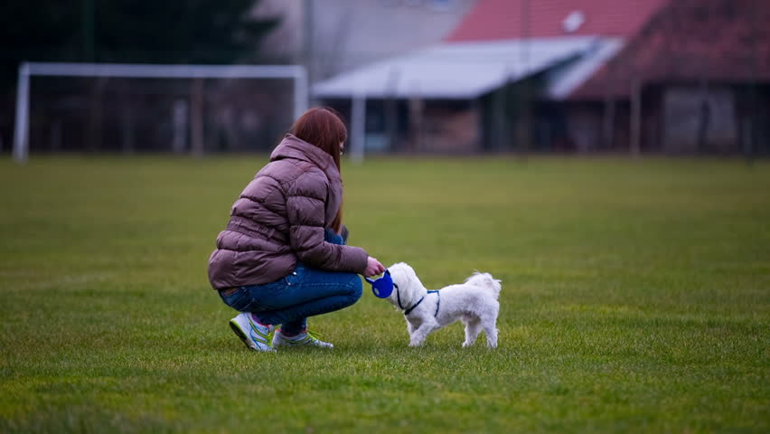 Woman running with cute white puppy. Playing with hyperactive Maltese puppy jumping on green field.