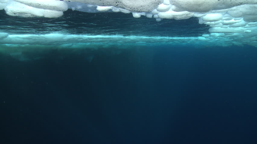 Emperor penguins (Aptenodytes forsteri) swimming to the surface and diving in hole in sea ice, some bubble trails, underwater, Cape Washington, Antarctica #9322064