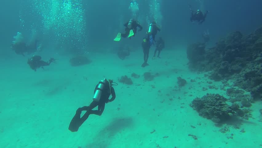 Divers swimming along the bottom, Red Sea  #9332654