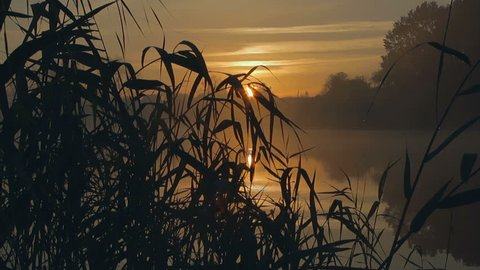 sunrise thru the reeds, sun thru the reeds, sunset on the riverbank, sun above the lake, sunset on the autumn river