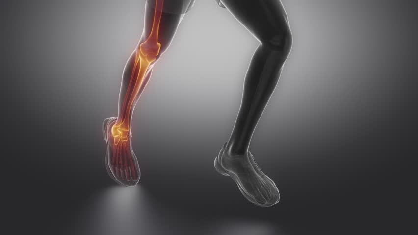 Focused On Leg Bones Anatomy Stock Footage Video 100 Royalty Free