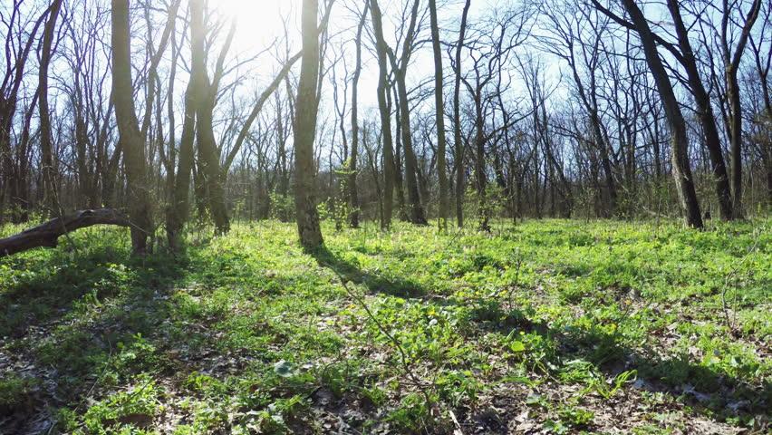 Camera on steadicam spring forest backlit sun | Shutterstock HD Video #9718094